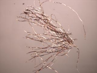 MICRO MACRO, Frammento di un'opera di Giulio Paolinial microscopio, Photo © Microcollection