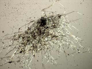 MICRO MACRO, Frammento di un'opera di Petra Varl al microscopio, Photo © Microcollection