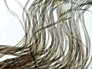 MICRO MACRO, Frammento di un'opera di QWERTY al microscopio, Photo © Microcollection
