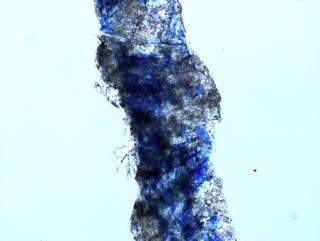 MICRO MACRO, Frammento di un'opera di Yoko Ono al microscopio, Photo © Microcollection