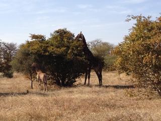 Intercultura - Capitolo 12 Ricordi di viaggio, Escursione alla riserva di Bandia Park, parco di conservazione per specie selvatiche africane