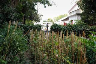 Intercultura - Capitolo 22 Il Giardino delle Meraviglie