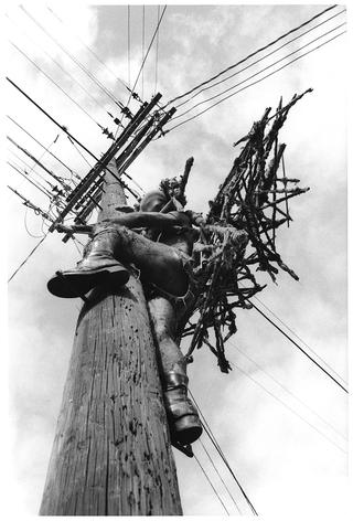 Kim Jones, Telephone Pole, 1978
