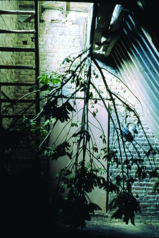 Maja Bajevic, Avanti Popolo, Maja Bajevic, Arbre, 2001, installation / photographs. Exhibition view: Watou Poeziezomer 2001, Watou, Belgium, organized by S.M.A.K., Ghent, Belgium (Curator Ann Demeester), 2001.  Photo documentation: Maja Bajevic