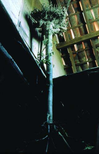 Maja Bajevic, Avanti Popolo, Maja Bajevic, Arbre, 2001, installation / photographs. Exhibition view: Watou Poeziezomer 2001, Watou, Belgium, organized by S.M.A.K., Ghent, Belgium (Curator Ann Demeester), 2001  Photo documentation: Maja Bajevic