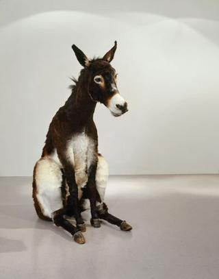 Maurizio Cattelan, Senza titolo (Un asino tra i dottori), 2004 Taxidermy 160 x 80 x 175 cm Courtesy:Marian Goodman Gallery, New York
