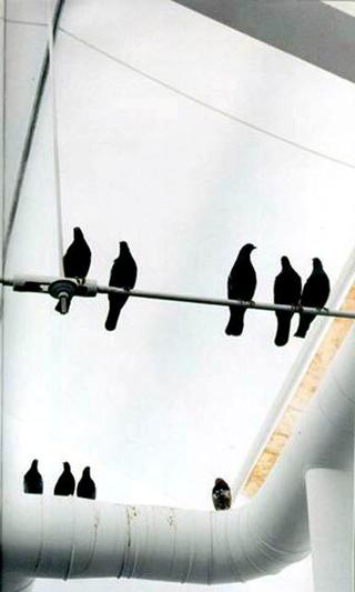 Maurizio Cattelan, Turisti, 1997 (Tourists) Stuffed pigeons misura ambiente XLVII Biennale, Venezia