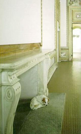 Maurizio Cattelan, Morto stecchito, 1997 (Stone dead) Stuffed dog 38 x 30 x 15 cm Castello di Rivoli - Museo d'Arte Contemporanea, Rivoli (TO) Foto di Paolo Pellion