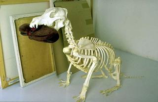 Maurizio Cattelan, Senza titolo, 1998 (Untitled) Skeleton, slippers dimensioni reali